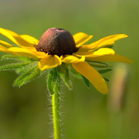 by Patti Cooper - Flowers Flowers in the Wild (  )
