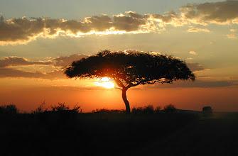 Photo: Acacia tree