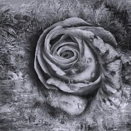 by Al Duke - Digital Art Things ( rose )