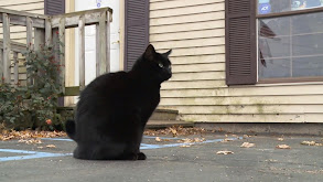 New Cats on the Block thumbnail