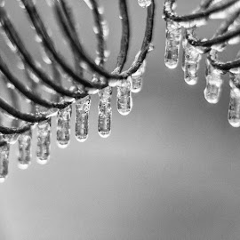 Coil and Frozen drops by Sue Matsunaga - Black & White Macro