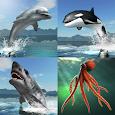 Sea Battle MMO icon
