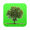Indian State Tree