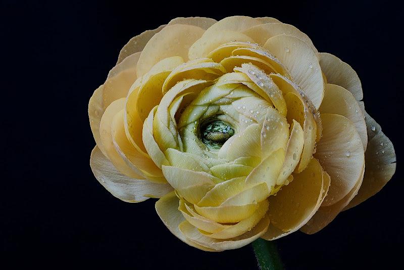 sfumature di giallo di nuvolina62