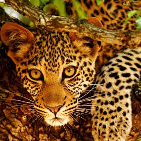 by Gareth Carter - Animals Other Mammals