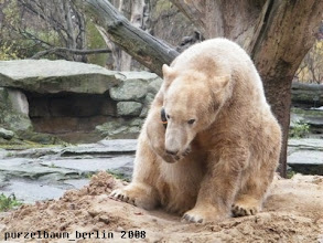 Photo: Knut klemmt sich den Ball zwischen Tatze und Kopf ;-)