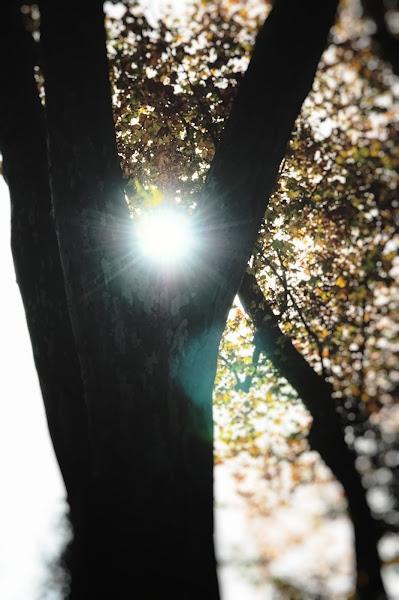 Photo: KPW - backlight tree