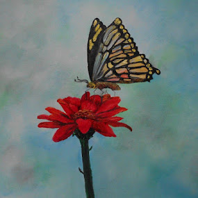 Swallowtail by Rhonda Lee - Painting All Painting