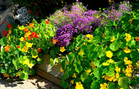 Kwiaty Na Balkon Twojogrodek Pl