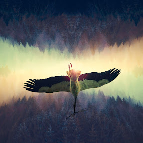 My definition is this... by Anne-Cecile Pflieger - Digital Art Animals ( bird, flying, stork, annececilegraphic, tree, composition, trees, forest, flare, woods, manipulation, animal,  )