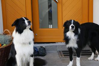 Photo: Duke (links) mit Bruder Earl