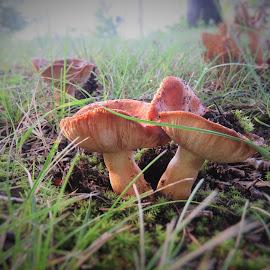 by Mary Gallo - Nature Up Close Mushrooms & Fungi (  )