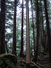Photo: A cedar tree stripped of bark to be used in native crafts.