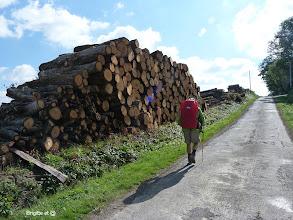 Photo: Beaucoup de bois ,encore sur place ,après la tempéte de début 2009