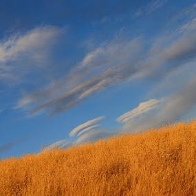 Orange Fields by Jess Trudeau - Landscapes Prairies, Meadows & Fields ( clouds, grass, scenery, fields )