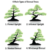 Types of Bonsai Trees