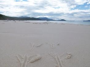 Photo: gufaldo delle Whitsunday Islands