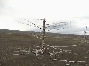 Photo: и далее мертвый лес