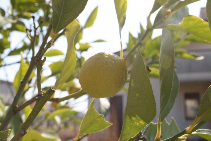 La luce del limone di sergioseat5