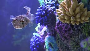 Urijah Faber's Ultimate Fish Tank thumbnail
