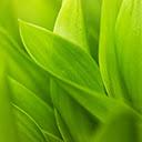 Grass Wallpapers Theme Grass New Tab