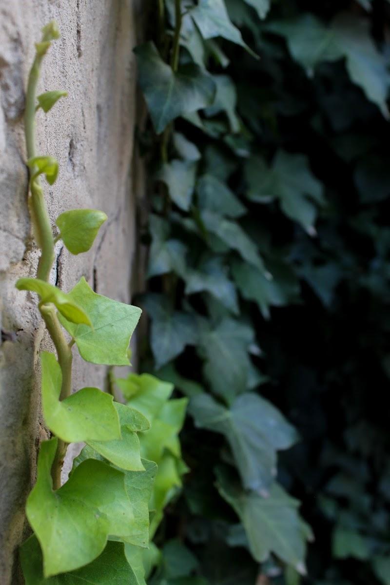 50 sfumature di green di Emanuela Pelusi