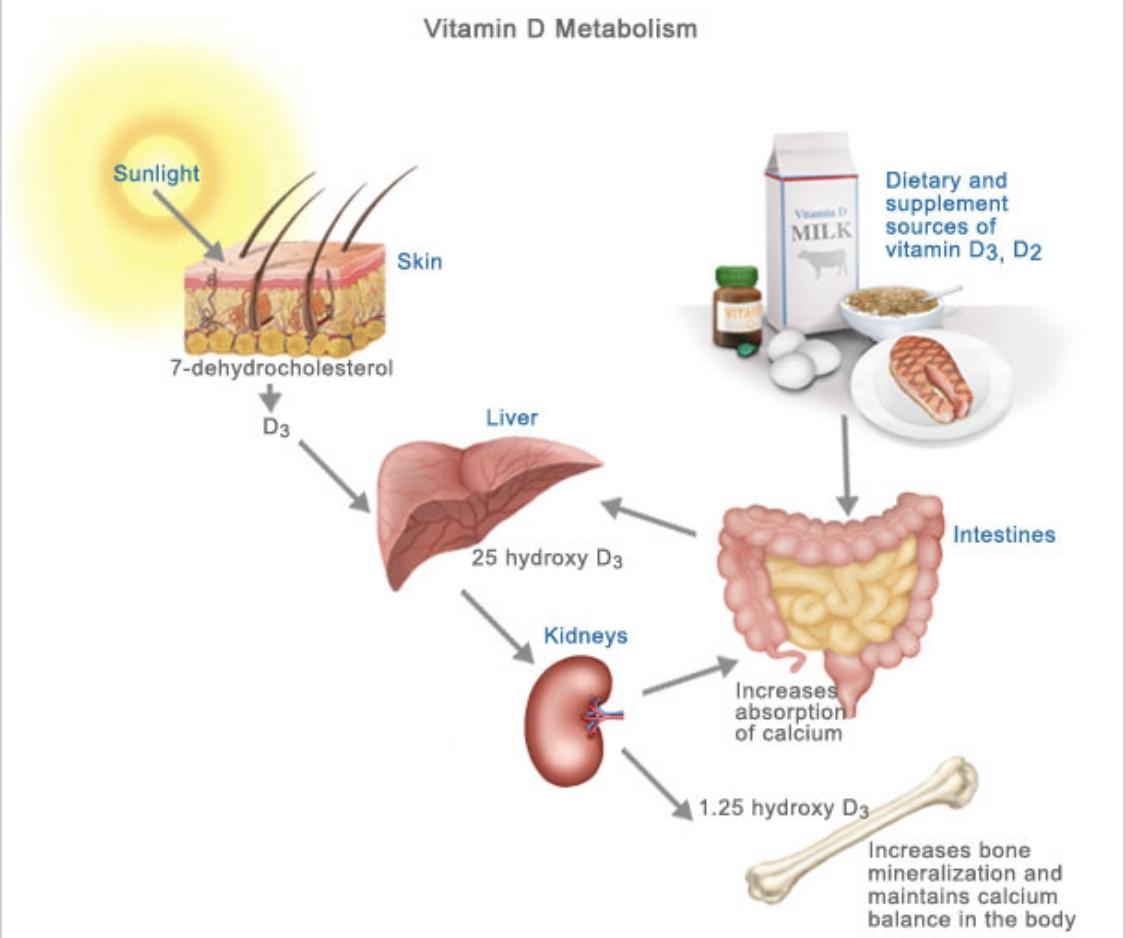 fitline витамин D
