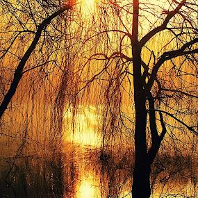 by Željko Oskoruš - Nature Up Close Trees & Bushes