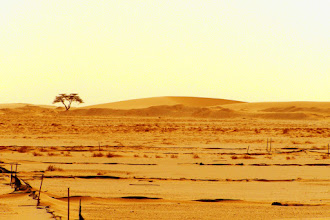 Photo: Mauritanian desert