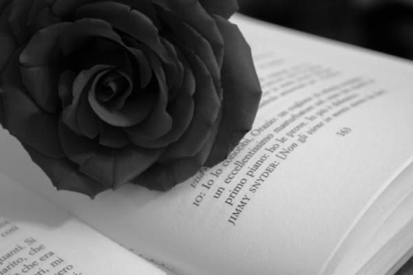 Ti regalerò una rosa di kikka78