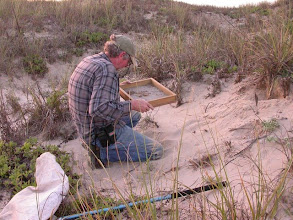 Photo: Sifting sand drawn from around the base of plants.