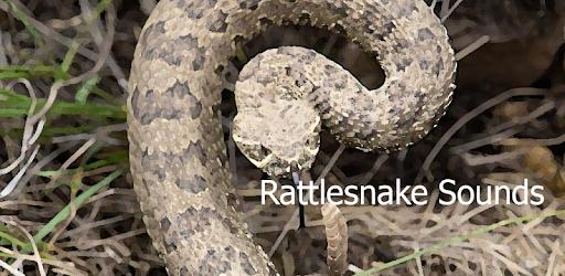 Rattlesnake Sounds ~ Sboard pro - Apps on Google Play