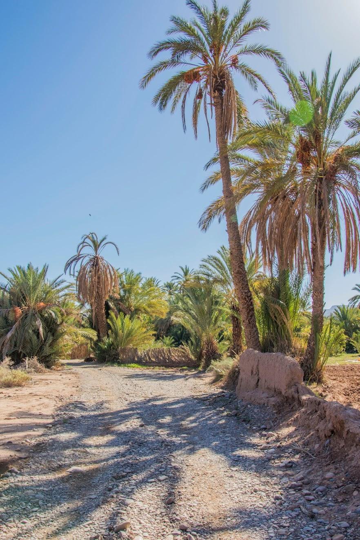 auto-rijden-marokko-tips