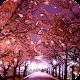 Sakura Live Wallpaper (app)