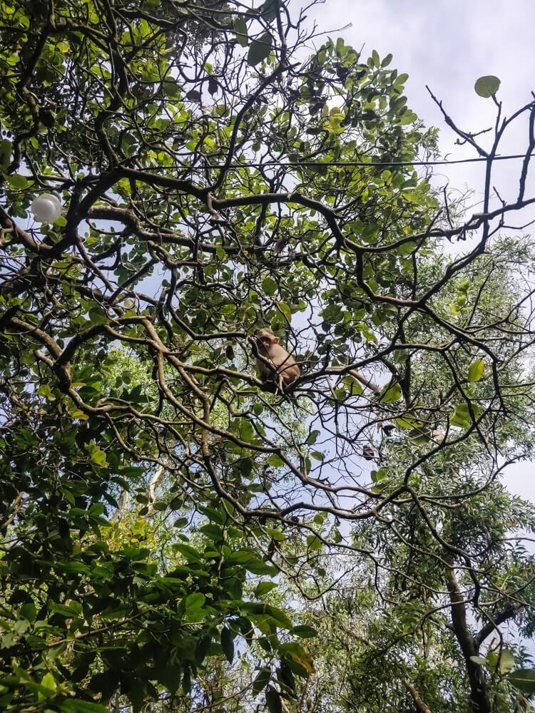 dandeli+jungle+camp+karnataka.jpg