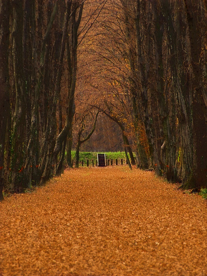 by Irena Klemenčič - Landscapes Forests