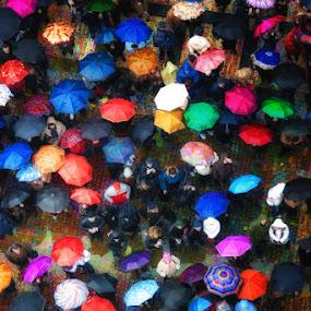 In Rain by Rory McDonald - People Fine Art ( umbrellas, crowd, prague )