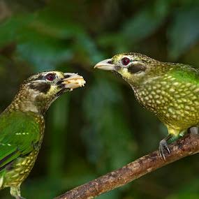 Spotted Catbird by Erica Siegel - Animals Birds ( catbird, bird, chick, feeding bird, spotted catbird )
