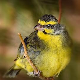 Zoo Bird by Nancy Young - Animals Birds ( bird animal, bird animal yellow, bird, animal )