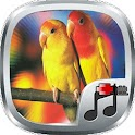 Klinic Kicau Love Bird icon