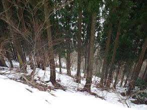 雪が少なく林道歩き