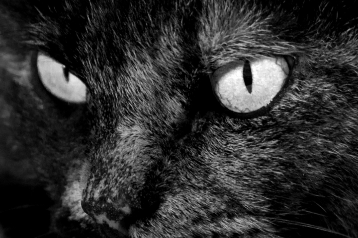 A me gli occhi! di elenaraja