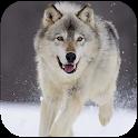 Wolf Dog Simulator icon