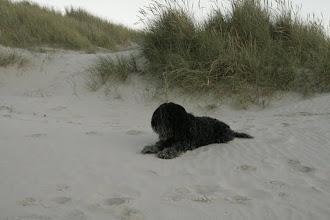 Photo: Bommel im warmen, weichen Sand