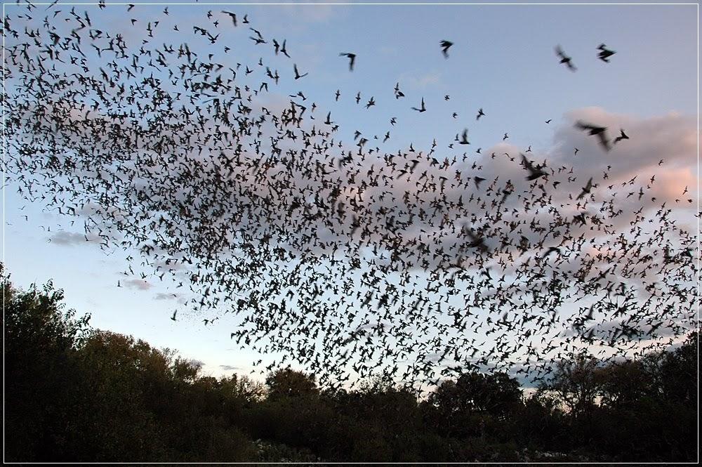 Bracken Bat Cave, a maior colônia de morcegos do mundo