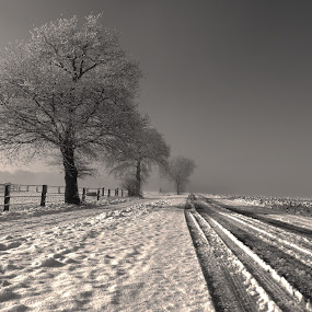 Wintertime by Gert de Vos - Black & White Landscapes