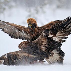 by Marie Gillander - Animals Birds