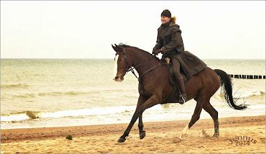Photo: Gestade mit Pferd und Reiter