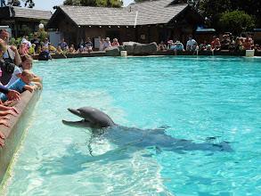 Photo: Dolphin Point