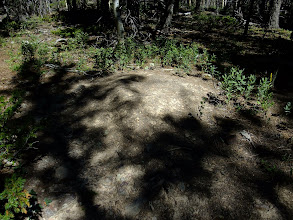 Photo: Big ant hill - these were common on the east side of the Pecos Wilderness.